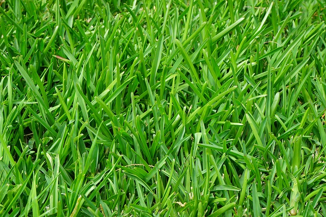 How to Restore Grass Killed by Weed Killer