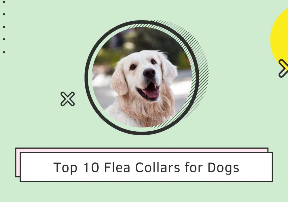Top 10 Flea Collars for Dogs