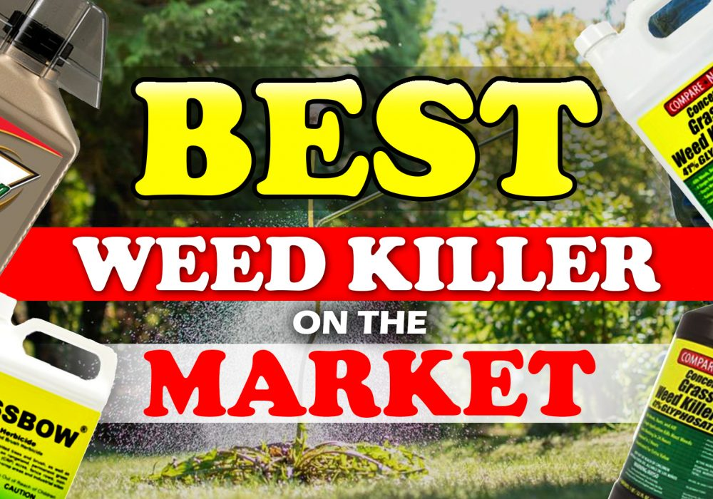 Best Weed Killer On The Market Reviews