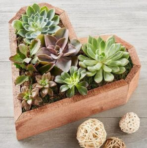 Heart Succulent From Harry And David